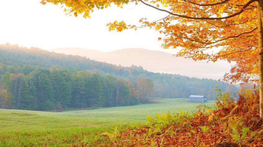 Vermont trees autumn fall landscape