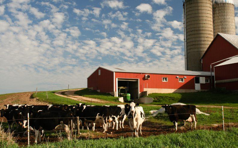 Wisconsin cows farmland barn
