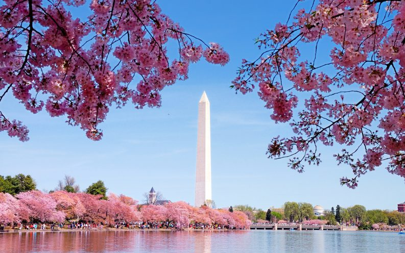 Washington District of Columbia tower cherry blossom