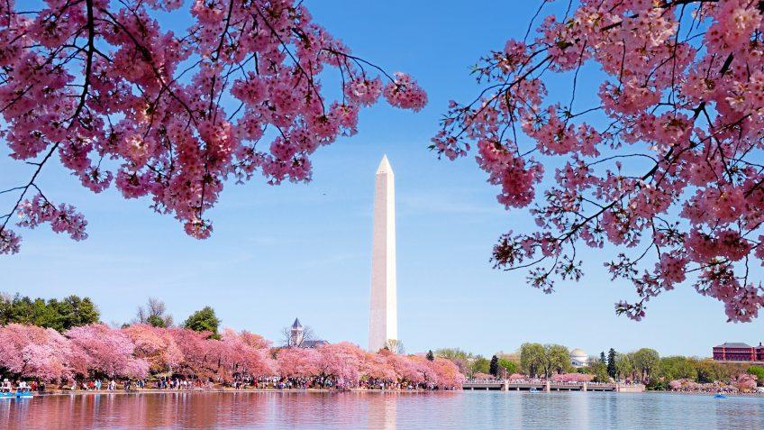 Washington District of Columbia tower cherry blossom