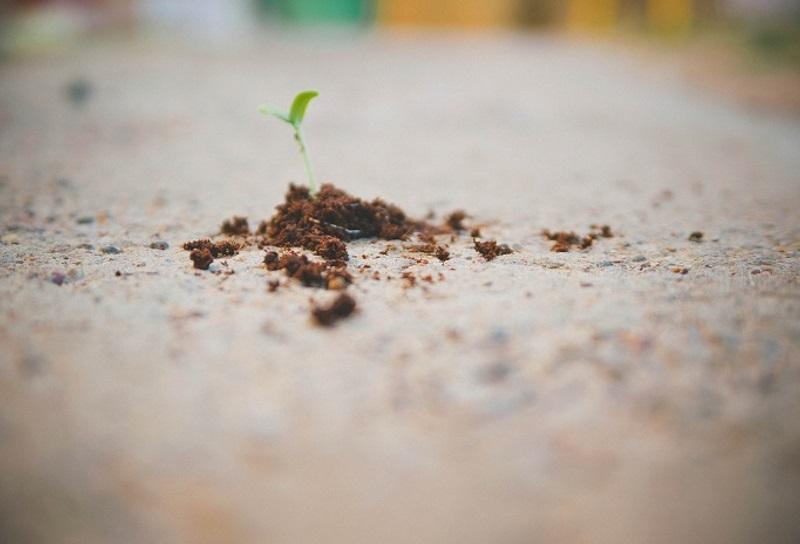 Grow Savings
