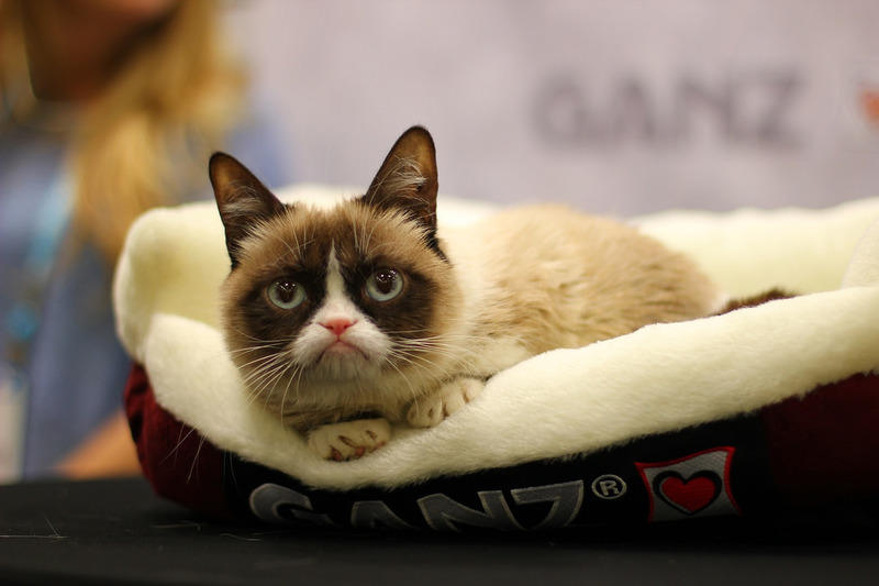 Grumpy Cat Is Paid More Than Jennifer Lawrence