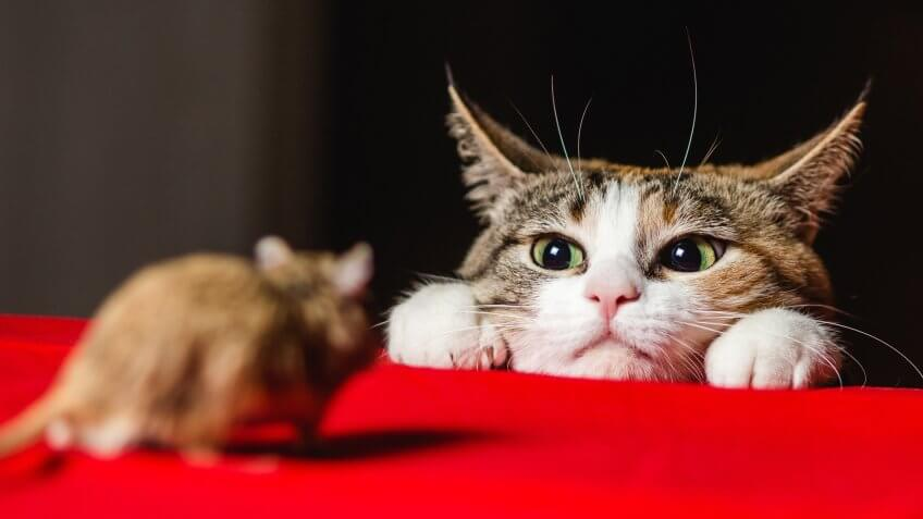Cats Used for Pest Control
