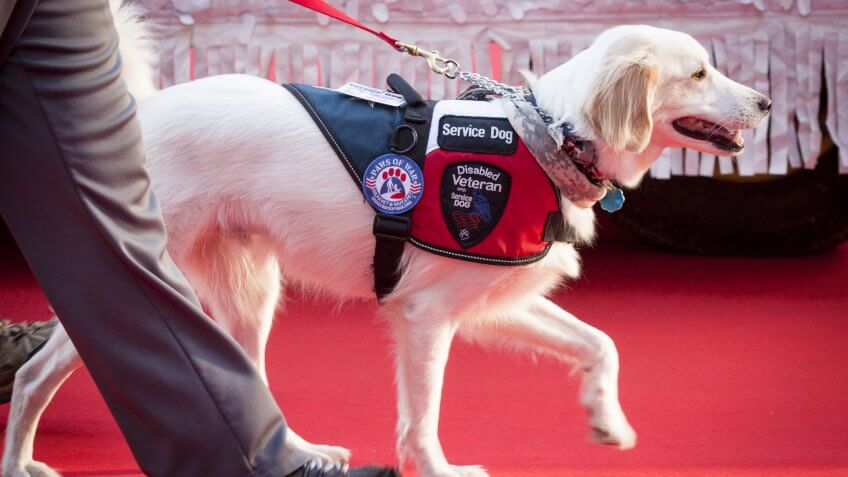 Guide Dogs and Service Animals