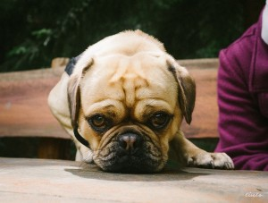 Tax Breaks for Pet Owners