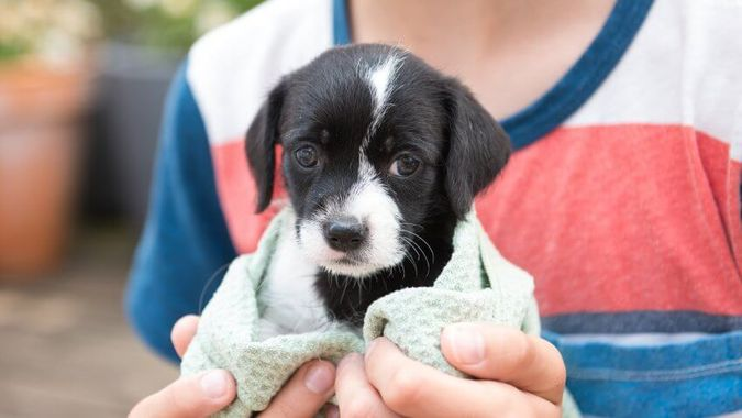 Shelter Pets Costs Less