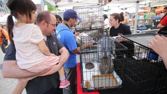 Pet Adoption Hurts Puppy and Kitten Mills