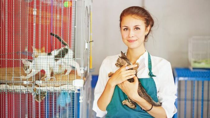 Shelter Pets Receive Health and Behavioral Screens