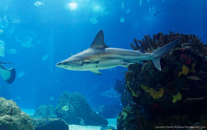 Shark Tank businesses