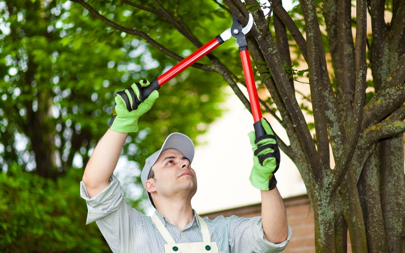how_to_trim_trees.jpg