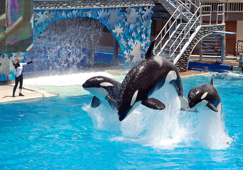 SeaWorld's $10M Effort to Draw Back Visitors as Earnings Fall Short