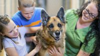 World Animal Day: Animal Charity Donations, Tax Deductions and You