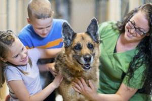 Animal charities