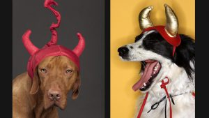 10 Outrageously Expensive Halloween Costumes for Pets