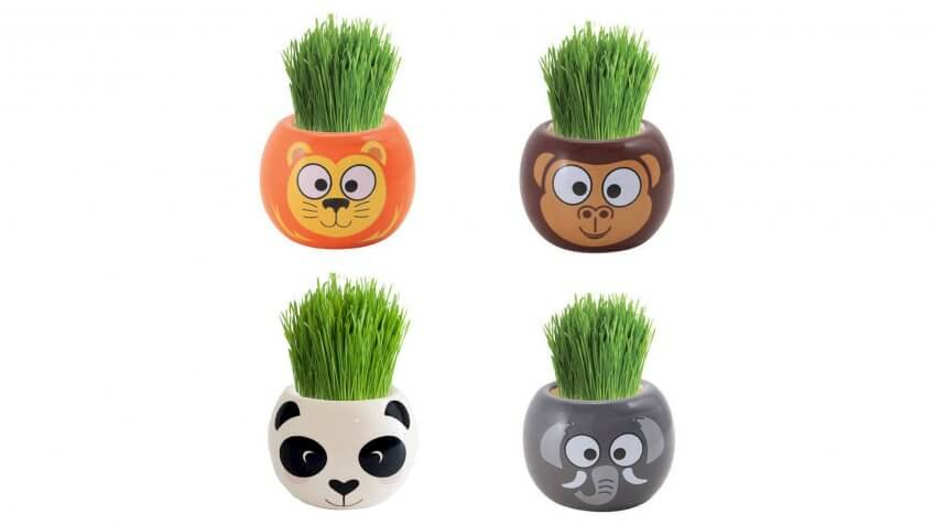 Buzzy Grow Kits Jungle Animals