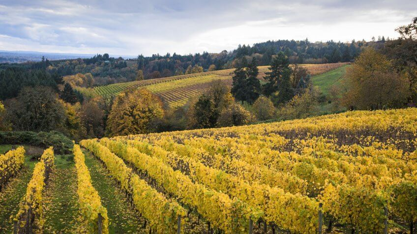 Willamette-Valley-wine
