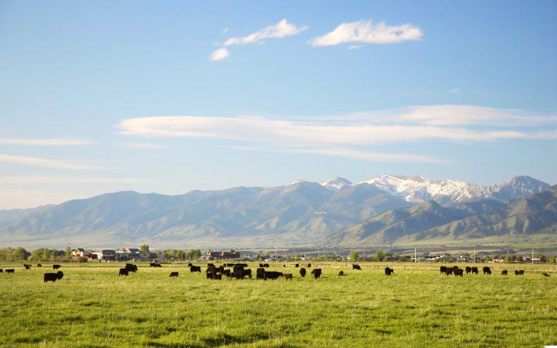 Montana interest rates