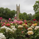 Best Colleges to Work for