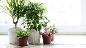 Turn Your Home Into an Oasis With These 5 Affordable Plants