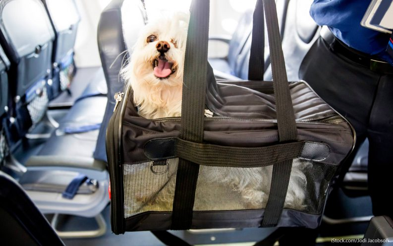 Pet Travel Fees