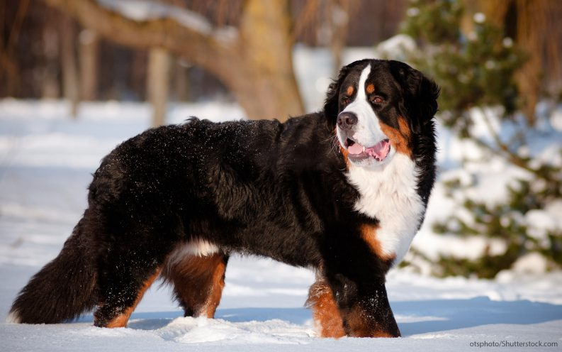 The 30 Most Expensive Dog Breeds To Own Video Las Vegas