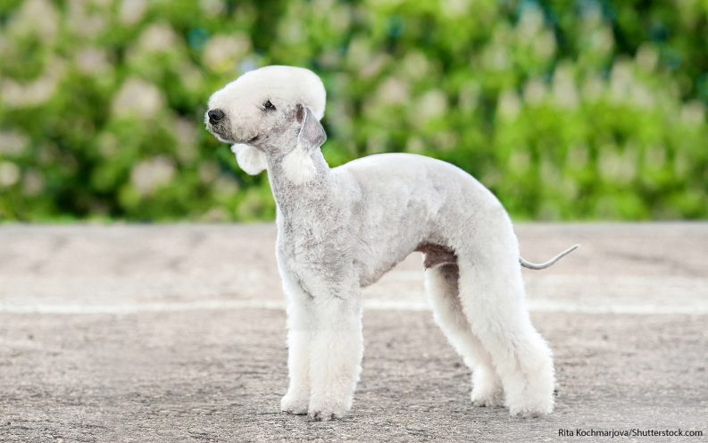 The 30 most expensive dog breeds to own — VIDEO | Las Vegas