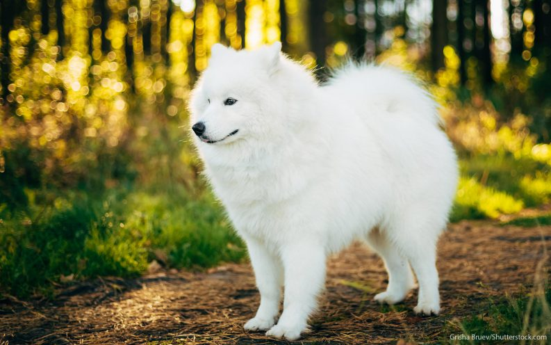 The 30 Most Expensive Dog Breeds To Own Las Vegas Review