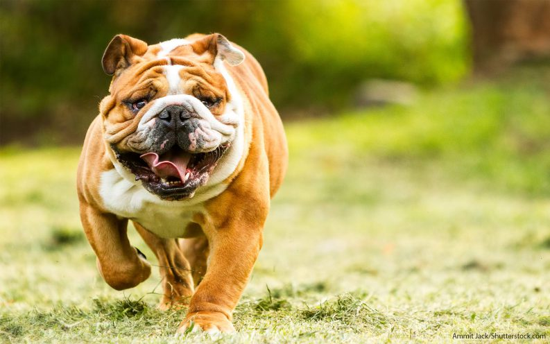 The 30 Most Expensive Dog Breeds To Own Video Las Vegas Review
