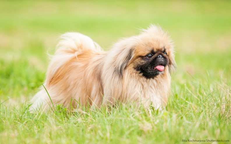 What Is The Least Expensive Breed Of Dog To Own