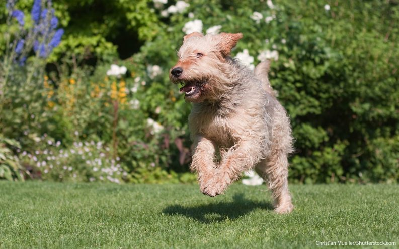 What Are The Least Expensive Dog Breeds