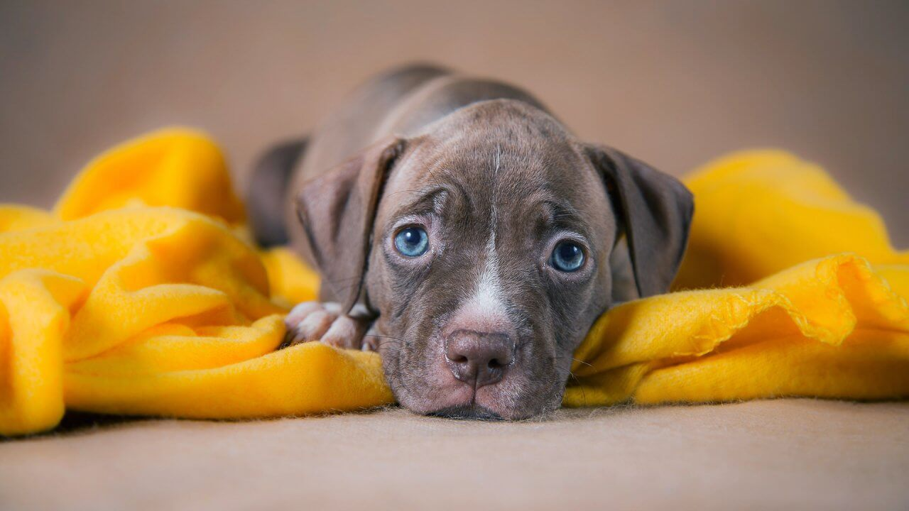30 Least Expensive Dog Breeds