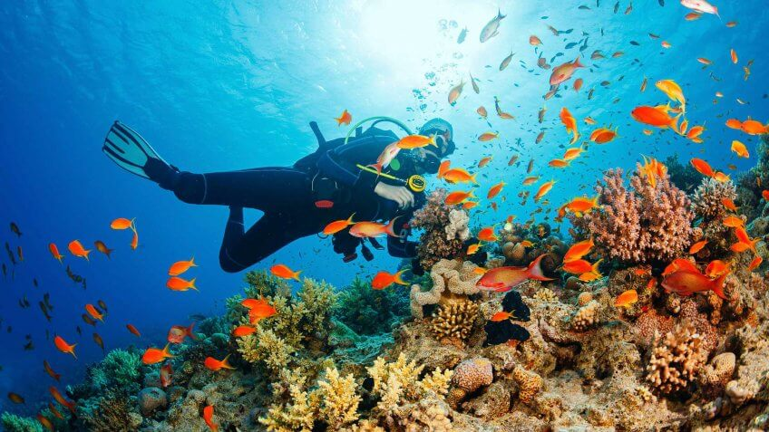 Caribbean Sea, Diving Into Water, Scuba Diving, Underwater Diving, Underwater Scuba diver explore and enjoy Coral reef Sea life - S