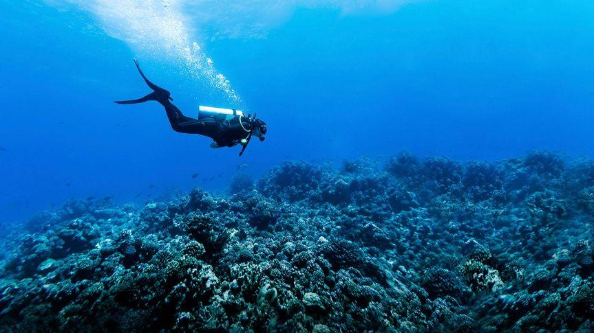 Deep-Sea Diving, Fish, French Polynesia - Stock image, Rangiroa Atoll, Scuba Diving, Underwater Diving, Woman Scuba Diving Over Huge Reef in Rangiroa