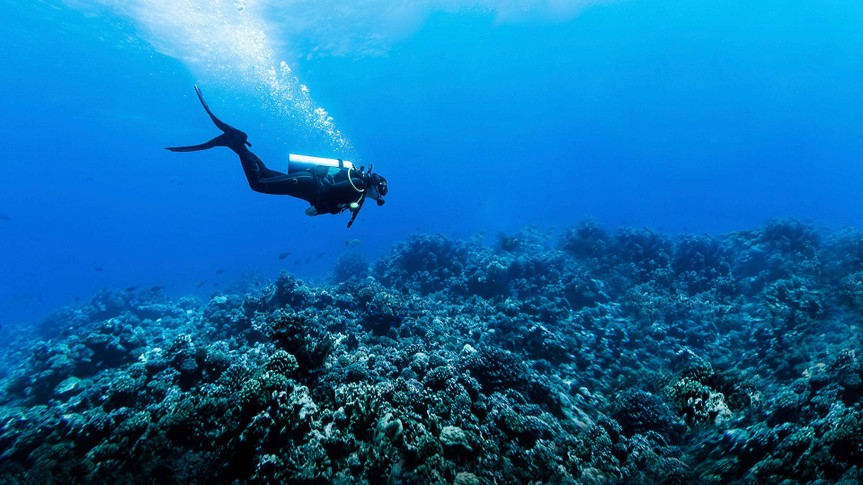 Deep-Sea Diving, Fish, French Polynesia - Stock image, Rangiroa Atoll, Scuba Diving, Underwater Diving, Woman Scuba Diving Over Huge Reef in Rangiroa