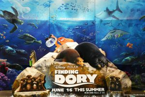 'Finding Dory' Movie Cast: Ellen DeGeneres Net Worth, Ed O'Neill Net Worth and More