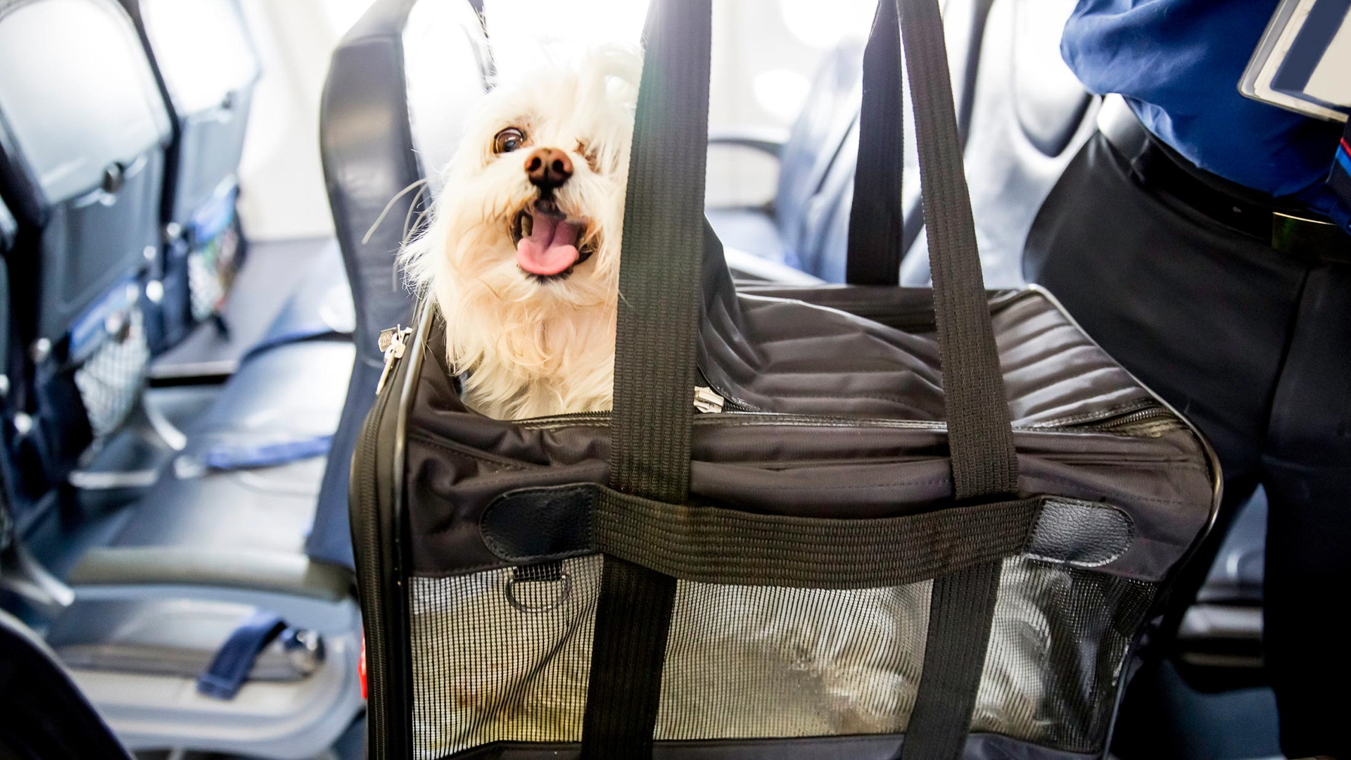 Hidden fees airlines charge you gobankingrates for Airlines that allow dogs in cabin