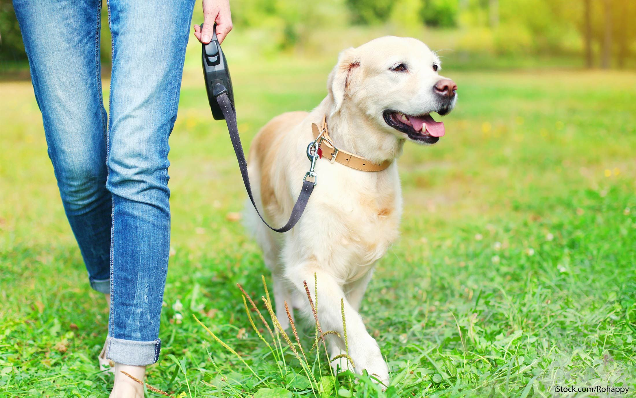 walk dogs get rid loans