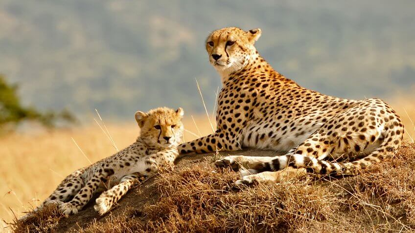 World best animal photos images for Best world photos