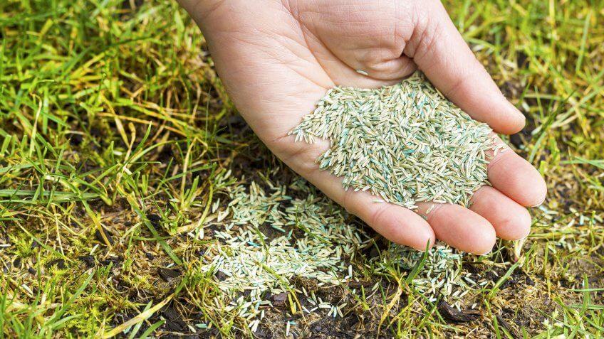 hands holding seeds on grass
