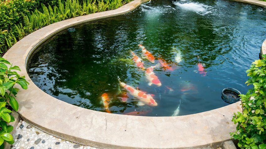 Craziest things that kill your home s value gobankingrates for Koi pond kiddie pool