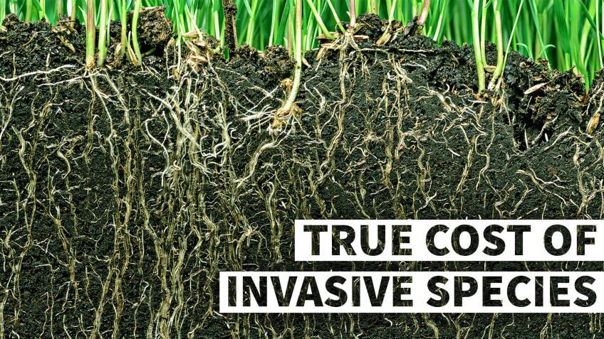 The True Cost of Invasive Species