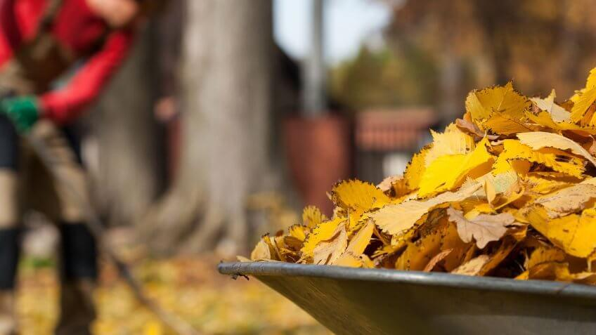 raked leaves in wheelbarrow