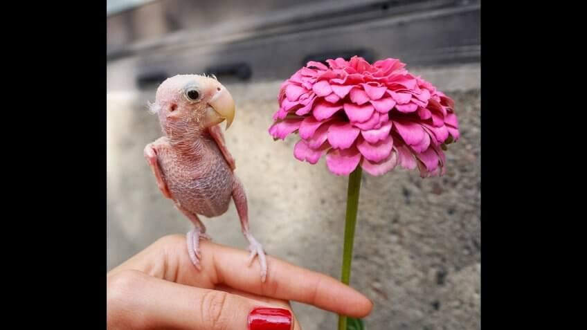 Rhea the Naked Birdie