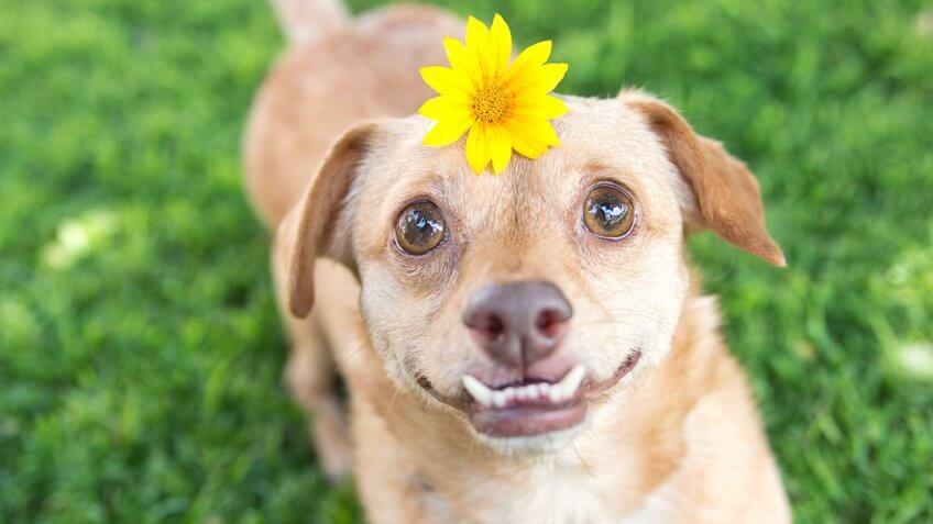 Daisy Underbite
