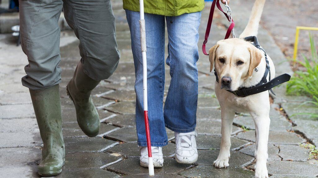 service dog walking with blind owner