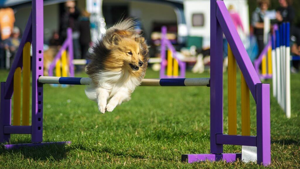 outdoor-dog-show