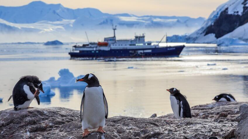 Gentoo penguins standing on the rocks and cruise ship in the background at Neco bay, Antarctica.