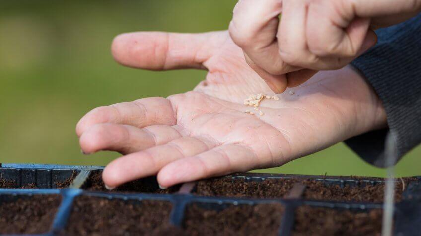 Start a Garden From Seeds