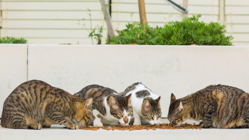 cat food, cats