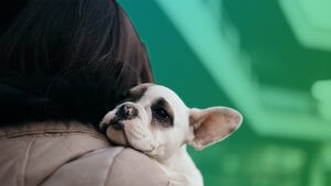 Why Adopting a Shelter Pet Is Good for Your Wallet and Your Soul